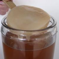 Чайный гриб и его полезные свойства: забытое средство