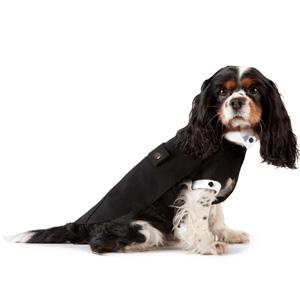 Джорджо Армани займется созданием дизайнерской одежды для домашних животных