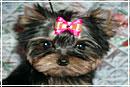 Модные домашние животные 2010: дорогу собакам и кошкам!