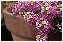 Комнатные цветы: лето посреди зимы