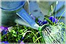 Садоводство: стили садового дизайна