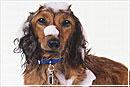 Шампунь для собак: косметика для красивой шерсти
