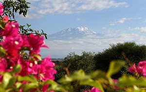 Вечер Бернса на горе Килиманджаро