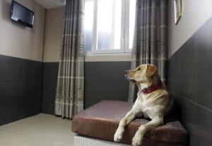 Actuel Dogs: роскошный отель для собак