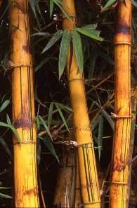 Телефон из бамбука
