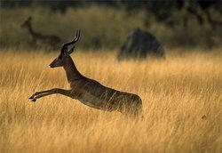 Намибия выставила на торги носорогов и антилоп