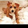 14 популярных мифов о собаках и их разоблачение
