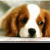 Кухня животных мира: рестораны для собак